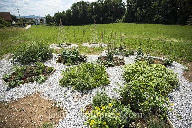 sadovnjak-medovit-vrt (3)